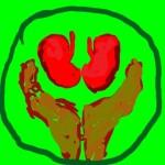 болки в бъбреците камъни в бъбреците лечение с билки