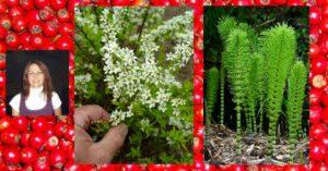 билки за отхрачване и хронична кашлица - 01
