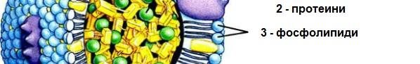 структура на липопротеин