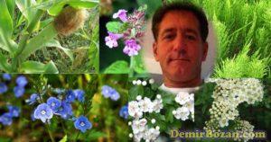 07 билки за бъбреци спирея, хвощ, глог, царевична коса, великденче, котешка стъпка