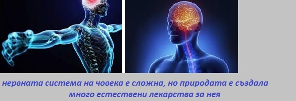 Билки за нерви, Демир бозан