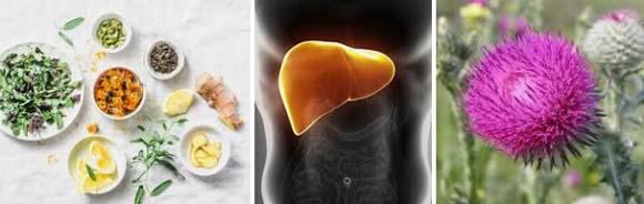 Стеатоза на черния дроб: първи белези, симптоми. Лекарства и билки